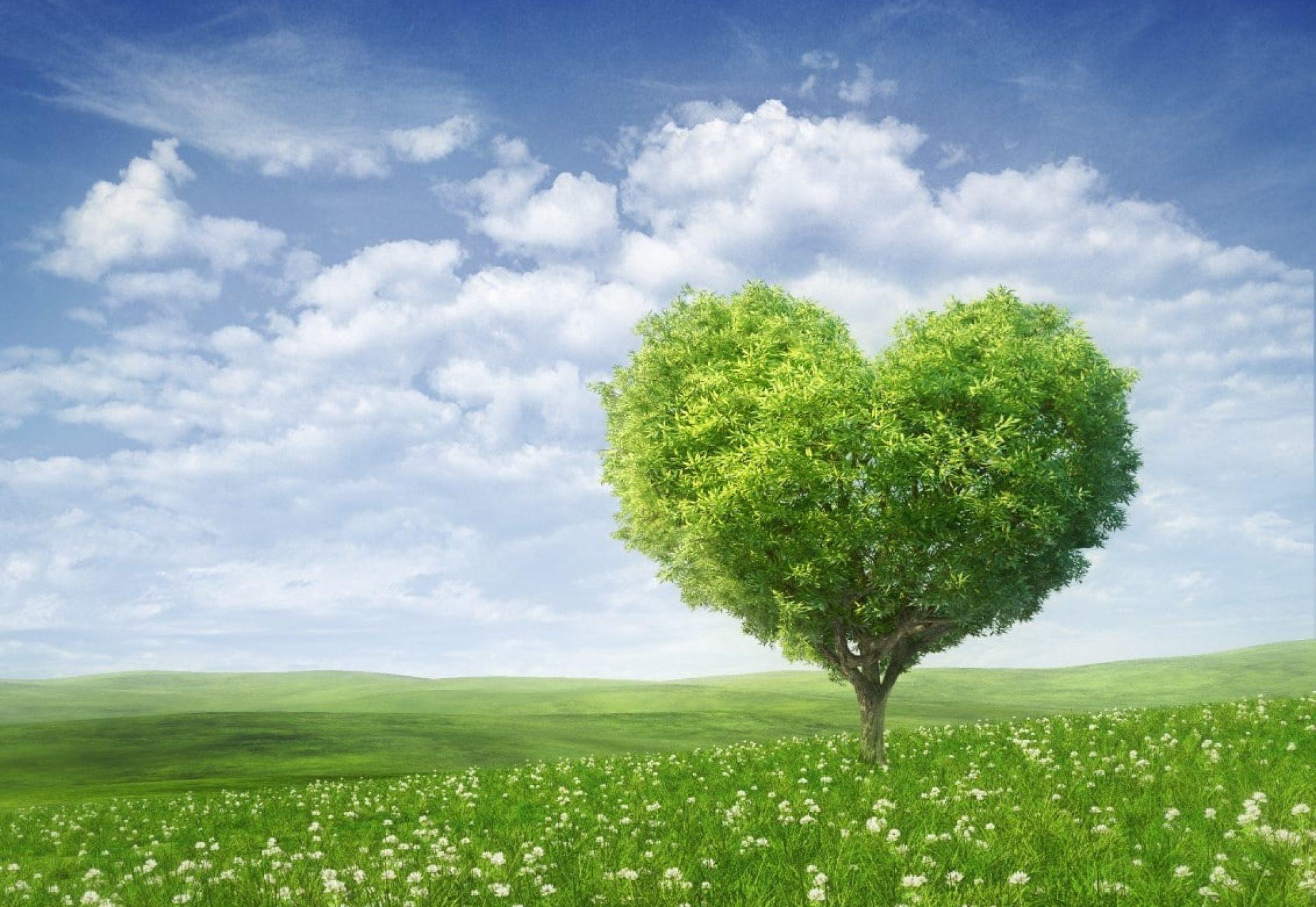 Arbre en forme de coeur.