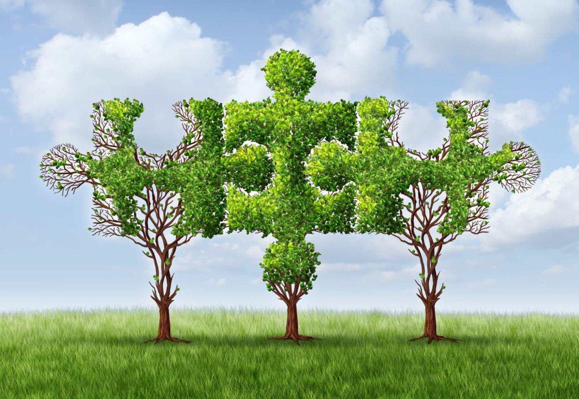 Cooperation trees