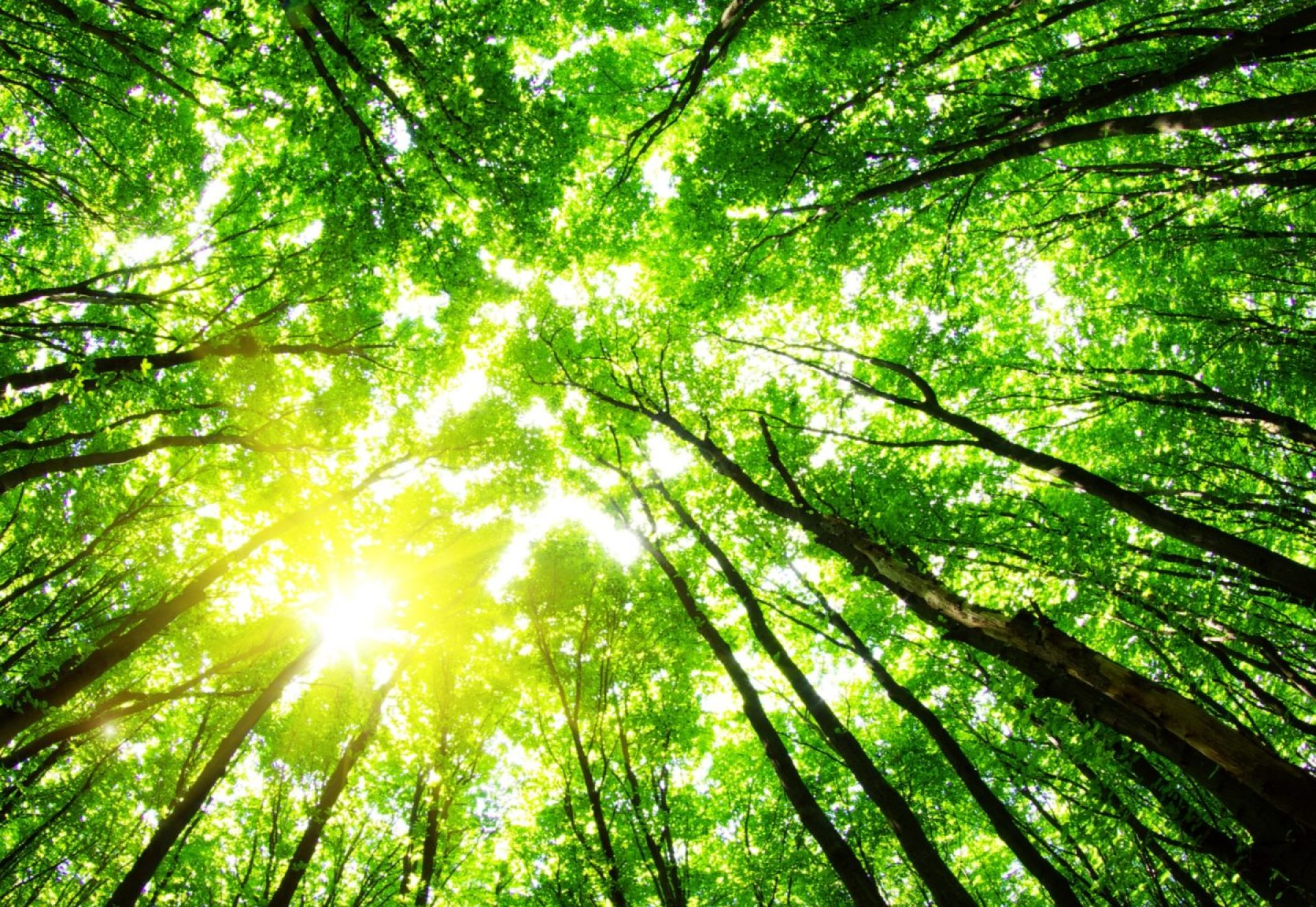 green-forest-background-sunny-day
